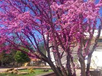 Санаторий «Саки», парк весной