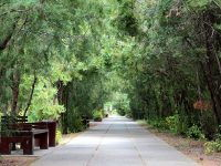 Санаторий «Саки», территория парка