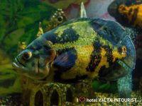 Рыбы в океанариуме